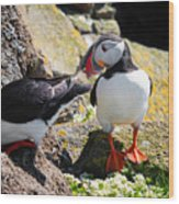 Cute Puffin Couple In Iceland Latrabjarg Wood Print