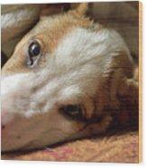 Cute Puppy Cuddles Wood Print
