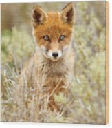 Cute Red Fox Kit Wood Print