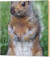 Cute Squirrel In The Park  Wood Print
