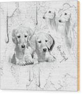 Cute White Salukis With Puppies Wood Print