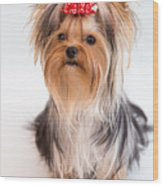Cute Yorkie Puppy With Red Bow Wood Print