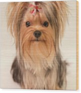 Cute Yorkie Wood Print