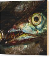 Cutlassfish Eyes Wood Print