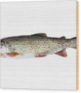 Cutthroat Trout In Perfect Condition On White Background  Wood Print