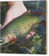 Cutthroat Trout On The Middle Fork Wood Print