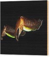 Cuttlefish Wood Print