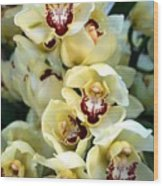 Cybidium Orchids Wood Print