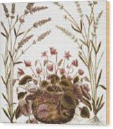 Cyclamen & Lavender, 1613 Wood Print