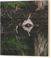 Cyclops In Reflection Wood Print