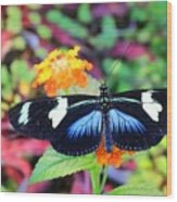 Cydno Longwing Butterfly Wood Print