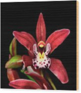 Cymbidium Orchid 001 Wood Print