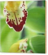 Cymbidium Seafoam Emerald Orchid Wood Print by Kathy Yates