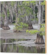 Cypress And Spanish Moss Of Caddo Lake State Park 4 Wood Print