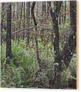 Cypress Arch Wood Print