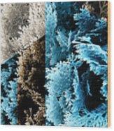 Cypress Branches No.3 Wood Print