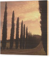 Cypress Driveway Wood Print by Andrew Soundarajan
