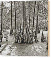 Cypress Evening Wood Print
