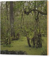 Cypress Forest Wood Print