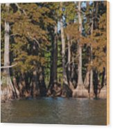 Cypress Grove Five Wood Print