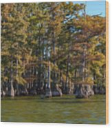 Cypress Grove Four Wood Print