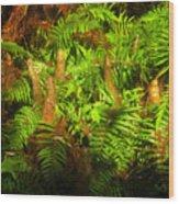 Cypress Knees In Ferns Wood Print
