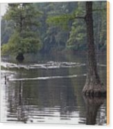 Cypress Lake Wood Print