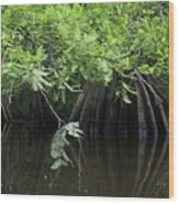 Cypress Leaves And Fluted Trunks Wood Print