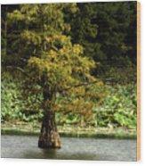 Cypress Matters Wood Print