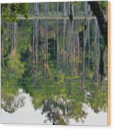 Cypress Pond Wood Print