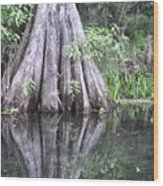 Cypress Reflections Wood Print