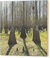 Cypress Sentinals Wood Print