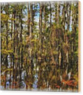 Cypress Strand Everglades Wood Print