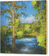 Cypress Tree By The River Wood Print