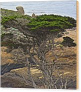 Cypress Tree In Point Lobos State Reserve Near Monterey-california  Wood Print