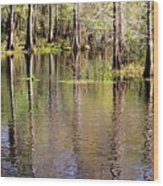 Cypress Trees Along The Hillsborough River Wood Print