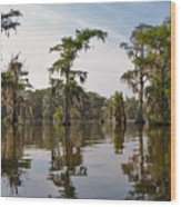 Cypress Trees And Spanish Moss In Lake Martin Wood Print