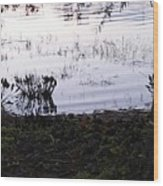 Cypress Trees And Water2 Wood Print