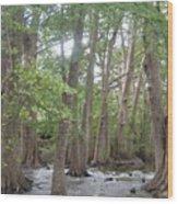 Cypress Trees Cypress Knees Wood Print