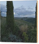 Cypress Trees Growing In The Rolling Wood Print