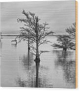 Cypress Trees In Lake Mattamuskeet North Carolina Wood Print