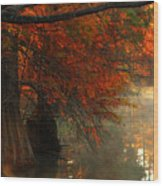 Cypress Trees In Red Wood Print by Iris Greenwell