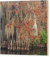 Cypress Winter Colors Wood Print