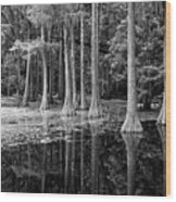 Cypresses In Tallahassee Black And White Wood Print