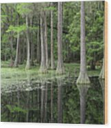 Cypresses In Tallahassee Wood Print
