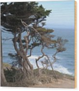 Cypress On The Cliff 15 Wood Print