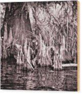Cyprus Knotts Wood Print
