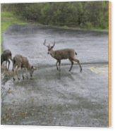D-a0033 Mule Deer Wood Print