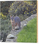 D-a0037 Gray Fox On Our Property Wood Print