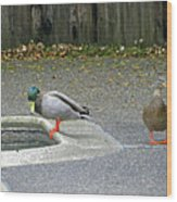 D-a0048 Mallard Ducks In Our Yard Wood Print